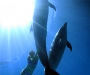次の記事: パラオでのイルカ撮影裏話 「ちゃんと撮ってるから」