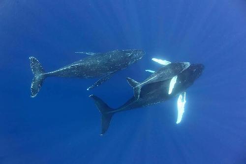 クジラの画像 p1_16