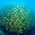タイ「セイルロック」ダイビング