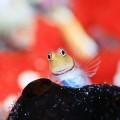 鍵井靖章写真展「海の生き物に出会う「オーロラモール フォト水族館」
