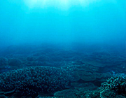 古見きゅうが見た本州最南端のサンゴの町
