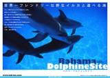 200505_bahamas_dolphin_cover