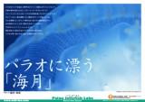 200505_palau_jerryfish_cover