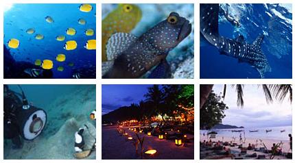 タイ・タオ島