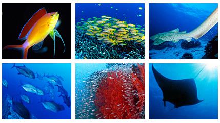 タイ・スミラン諸島