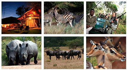 南アフリカ 野生動物との接近遭遇