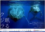 200606_tonga_cover