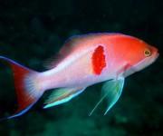 前の記事: 【大瀬崎】魚影もどんどん濃くなる、にぎやかな夏の海到来!