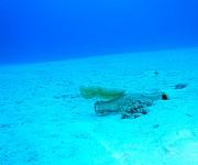 次の記事: 【阿嘉島】空きビンに寄り添う、小さなコブシメ