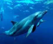 次の記事: 御蔵島の気まぐれなイルカたち ~イルカからの~、ハンマーヘッ