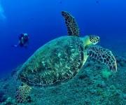 前の記事: ダイバーの過半数近くがアクティブに水中おしっこをする事実