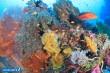 タイ・シミラン諸島の水中景観 Vol.1(写真:越智隆治)