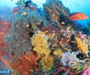 前の記事: タイ・シミラン諸島の水中景観 Vol.1(写真:越智隆治)