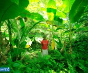 次の記事: ミクロネシア・ヤップの森の中 (写真:越智隆治)