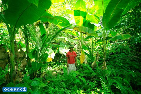 ミクロネシア・ヤップの森の中 (写真:越智隆治)
