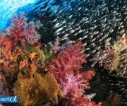 前の記事: タイ・シミラン諸島の水中景観 Vol.2 (写真:越智隆治)