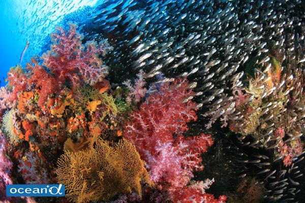 タイ・シミラン諸島の水中景観 Vol.2 (写真:越智隆治)