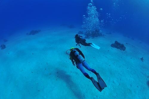 バディ潜水(セルフダイビング)したことありますか?