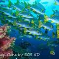 パプアニューギニア・ダイビングイベント