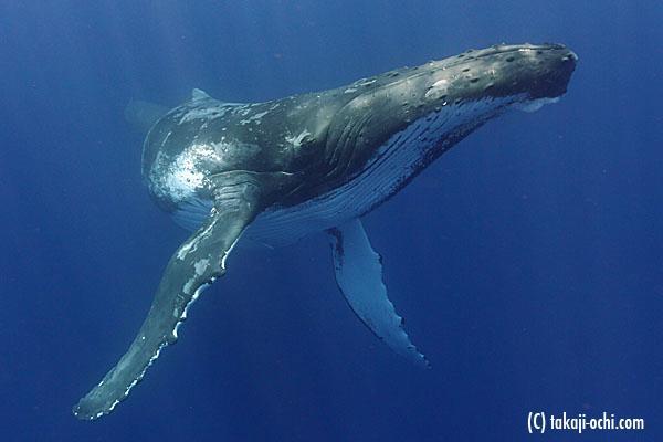 クジラの画像 p1_35