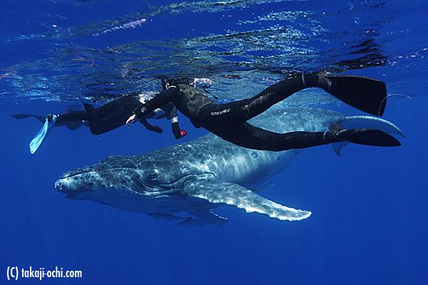 クジラの画像 p1_7