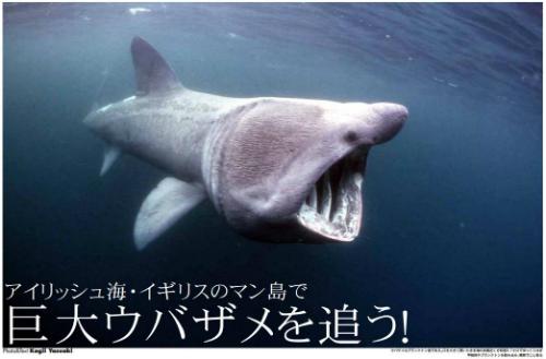 ウバザメを追う!ウェブマガジン