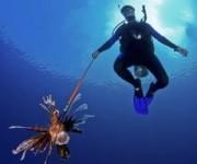 前の記事: 欧米ダイバーが好きだったはずのミノカサゴを殺しまくるという異