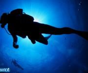 前の記事: 太り過ぎダイバーでは荒れた海に歯が立たない
