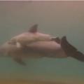 ドルフィンクエストのイルカの出産シーン