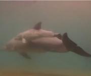 前の記事: イルカが海の中で出産するシーンをとらえた貴重な映像