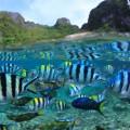 南国のカラフルな魚たち