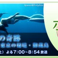 「イルカの島の奇跡 生物の楽園・御蔵島」BS朝日