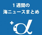 前の記事: この1週間の海ニュースまとめ(2013.3.25)