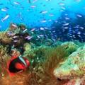 Cカード協議会「第1回ダイバー自身の安全対策セミナー」