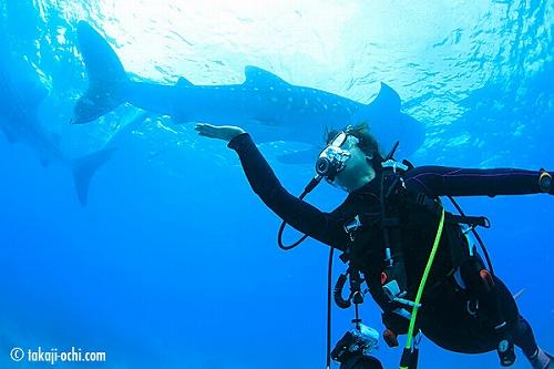 セブ島オスロブの手乗りジンベエザメ