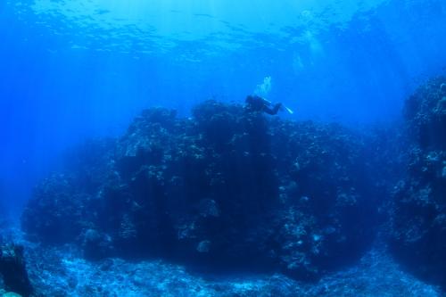 フォース・パス・ドゥ・ウィトエのサンゴ