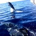 パプアニューギニア、タワリ・リゾートのイルカ