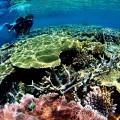 パプアニューギニア、タワリ・リゾート