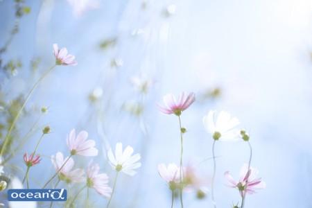 東北岩手・大船渡市浪板海岸の花