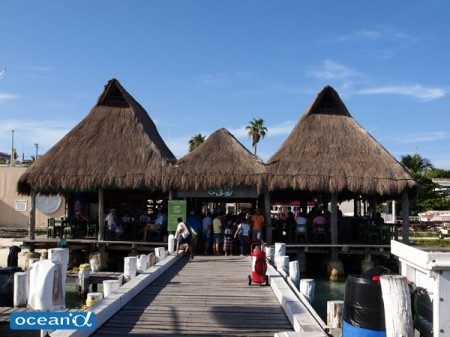 メキシコ、ジンベエザメのスペシャルトリップ