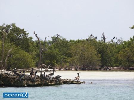 メキシコのイスラ・コントイ島