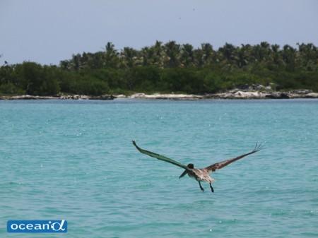 メキシコ、ムヘーレス島のジンベエザメ、ウェブマガジン