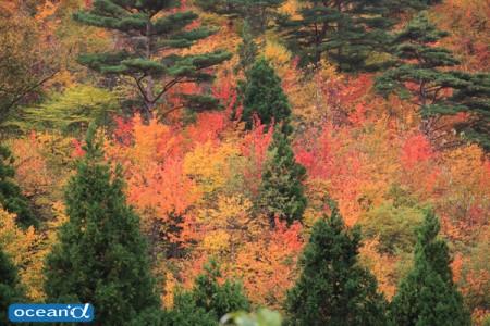 秋深まるころ、サーモンスイムはピーク