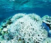 次の記事: 白化したサンゴの美しさをどう受け止めるか~岡田裕介の海中時間