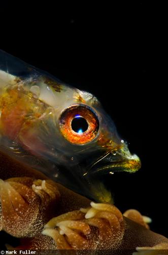 """魚の""""あくび""""の水中写真"""
