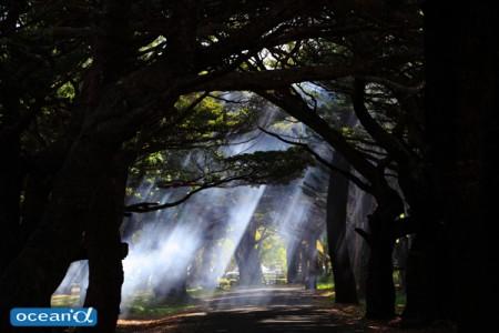 ニューカレドニア、ヌメア&イル・デ・パンのウェブマガジン(撮影:越智隆治)