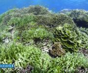 前の記事: グーグルの密漁との戦い ~グローバル・フィッシング・ウォッチ