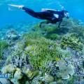 セブ島のサンゴとダイバー(撮影:越智隆治)