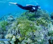 次の記事: 【アンケート】ダイビング事故に有効な酸素。実際、見たことあり