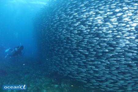 壁が迫ってくる! と思ったら、イワシの超魚群!